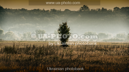 wild pear tree. Landscape panorama in the countryside, autumn.
