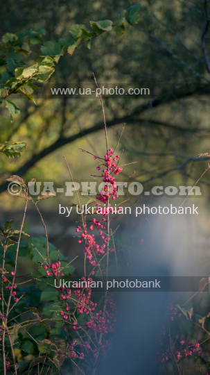 autumn plant forest on a blurred background