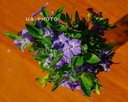 bouquet of forest periwinkle flowers on the table on a sunny day