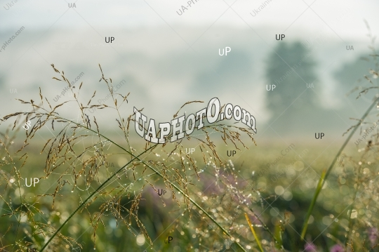meadow grass and dew. Amazing landscape of the morning mist