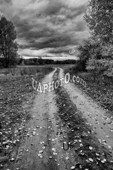 rain clouds, deciduous forest and dirt road
