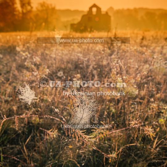 rural landscape and cobwebs ,  fall