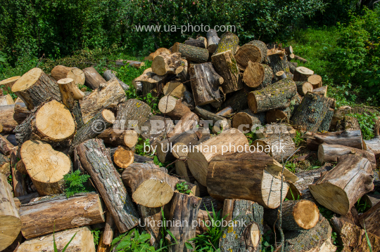sawn trunks of trees