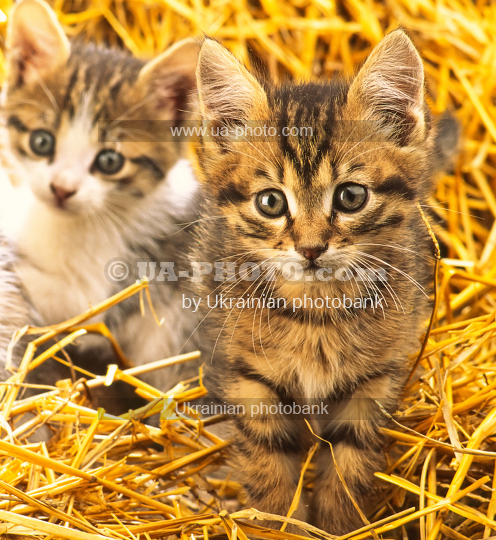 two kitten, close-up