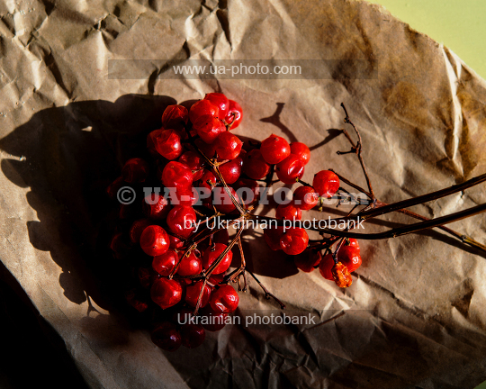 viburnum fruits
