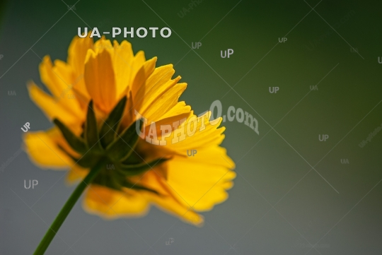 yellow decorative flower on a blurry dark background.