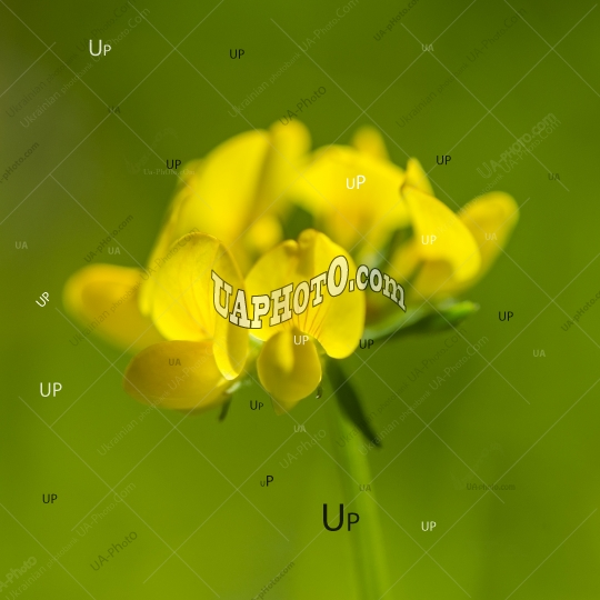 yellow flowers on a blurred green background.